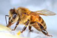 honeybee products